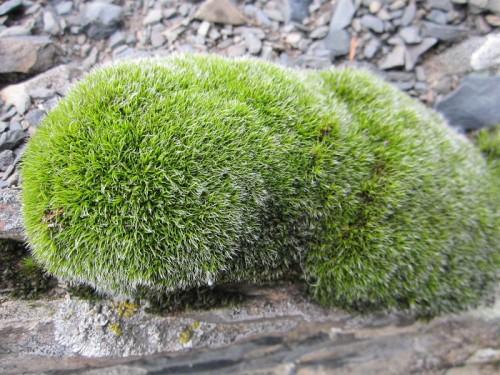 Памперсы из сибирского мха — натурально и полезно
