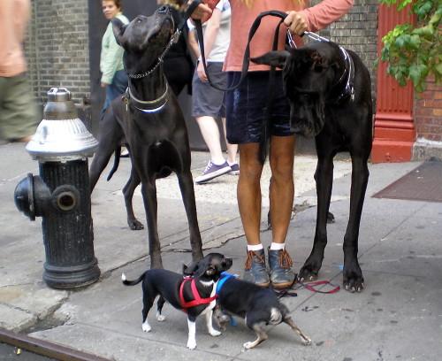 """Мобильное приложение """"Сайт знакомств для собак"""" разработали в Нью-Йорке"""