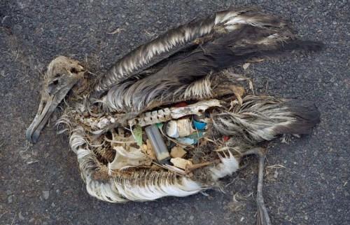птица мертва